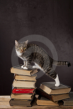 Domestic Cats On The Studio Stock Photos - Image: 8427973