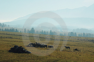 Flock Of Sheep Stock Photography - Image: 8429872