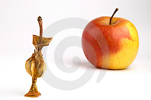 Apple Core Royalty Free Stock Photo - Image: 8430405