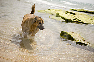 A Dog On The Seaside Stock Photos - Image: 8432113