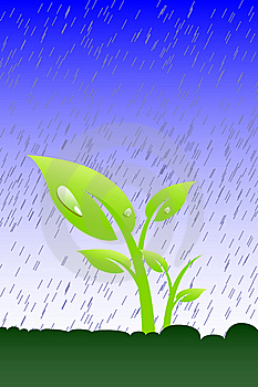Plant In The Rain Stock Photo - Image: 8436450