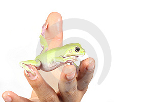Frog Royalty Free Stock Photography - Image: 8436517