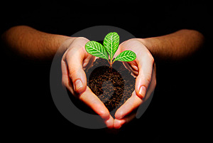 Plant In Hands Stock Photo - Image: 8437280