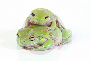 Frogs Stock Photos - Image: 8438103