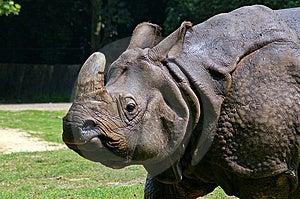 Rhinoceros Stock Image - Image: 8438551