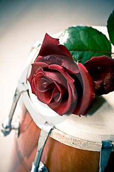 Red Rose On A Dhol Drum Stock Photography - Image: 8438702
