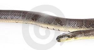 Snake Stock Photography - Image: 8439432