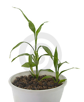Young  Green Sprout Stock Images - Image: 8439714