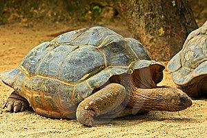 Giant Tortoise Stock Photo - Image: 8441070
