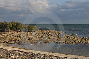 Coral Beach In Florida Keys Stock Photos - Image: 8441293