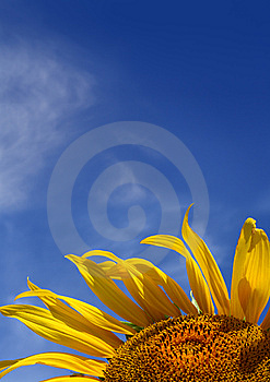 Sunflower On Sky Background With Copyspace Stock Photography - Image: 8441622