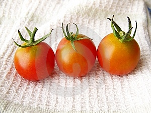 Tiny Tomatoes Stock Images - Image: 8444364
