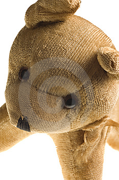 Antique Stuffed Dog Isolated On White Stock Photos - Image: 8445023