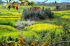 Pengzhou, China: Spring Sichuan Province Landscape Stock Photo - Image: 8446530