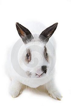 White Rabbit Stock Photos - Image: 8446903