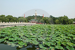 Lotus Pond Royalty Free Stock Photos - Image: 8449228