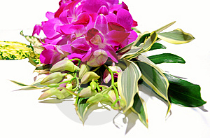 Orchid Bouquet Stock Photography - Image: 8449272