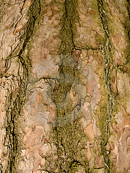 Tree Bark Royalty Free Stock Photo - Image: 8449575