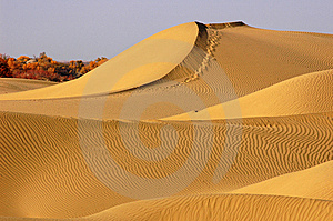 Desert Stock Image - Image: 8451691