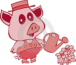 Pig With Water Can Royalty Free Stock Photography - Image: 8451777