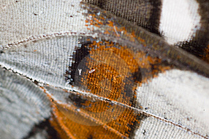 Butterfly Wing Stock Photo - Image: 8453630