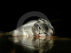 Kitten Stock Image - Image: 8454311