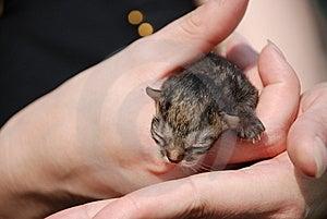 Newborn Kitten Stock Image - Image: 8456811