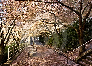Spring At A Commuter Station Stock Images - Image: 8457974
