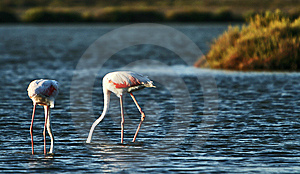Camargue Stock Photos - Image: 8458263