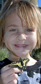 Boy Looking At Yellow Swallowtail Butterfly Stock Images - Image: 8458304