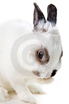 White Rabbit Stock Photos - Image: 8459393