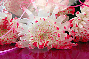 Close-up Of Chrysanthemum Flowers. Royalty Free Stock Photography - Image: 8459457