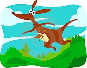 Kangaroo Royalty Free Stock Image - Image: 8460606
