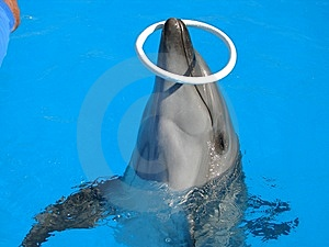 Dolphin Royalty Free Stock Image - Image: 8461706
