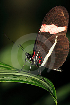 Butterfly On A Leaf Stock Image - Image: 8463631
