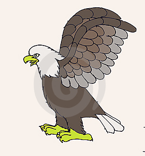 Bald Eagle Royalty Free Stock Photo - Image: 8464195
