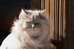 Cat Royalty Free Stock Photography - Image: 8464417