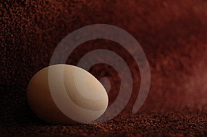 Egg Stock Images - Image: 8467514