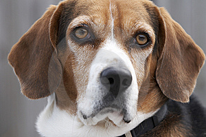 Dog Royalty Free Stock Images - Image: 8469869