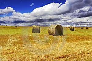 Haystacks On Yellow Field Royalty Free Stock Photos - Image: 8470238