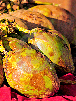 Noix De Coco Vertes Photo stock - Image: 8472930