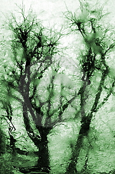 Reflection Of Tree Stock Photos - Image: 8476803