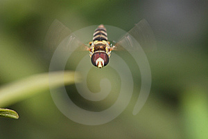 Fly Royalty Free Stock Images - Image: 8477359