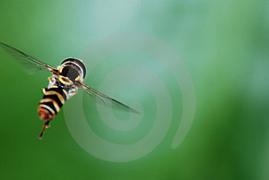 Fly Stock Photo - Image: 8477470