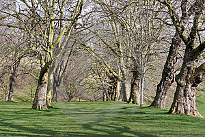 A Row Of Trees Stock Photography - Image: 8477512