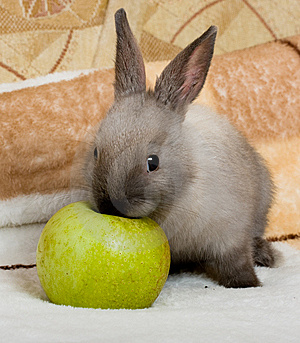 Cute Bunny With The Green Apple Royalty Free Stock Photos - Image: 8477698
