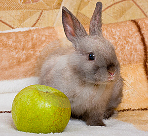 Cute Bunny With The Green Apple Royalty Free Stock Photos - Image: 8477708