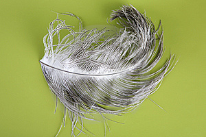 Feather Royalty Free Stock Photo - Image: 8477805