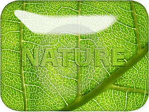 Nature Through Glass Royalty Free Stock Photos - Image: 8477838