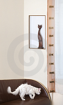 Two Cats Stock Photos - Image: 8478723